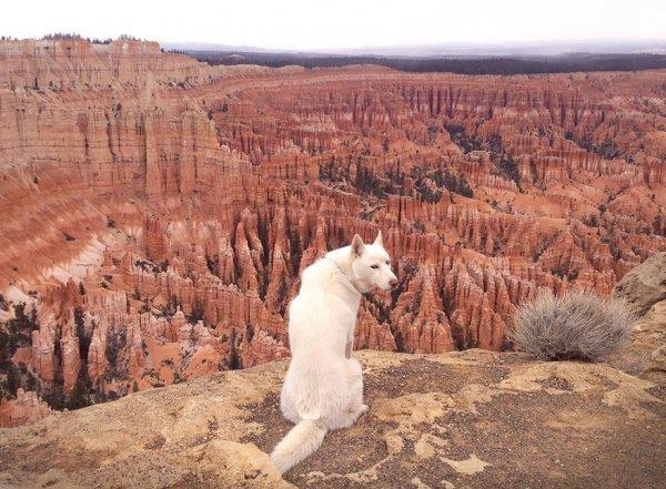 Невероятные приключения парня и его собаки в фотографиях величественных просторов природы (23 фото)