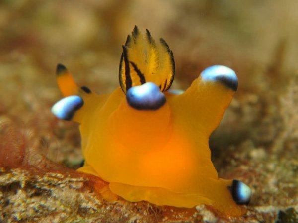 Морской родственник Пикачу (16 фото)