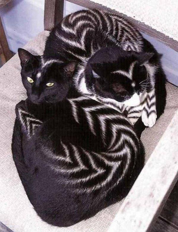 Раскрашенные коты и кошки (20 фото)