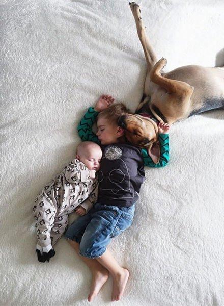 Очаровательные сони: Тео, Бо и Эванджелина (11 фото)