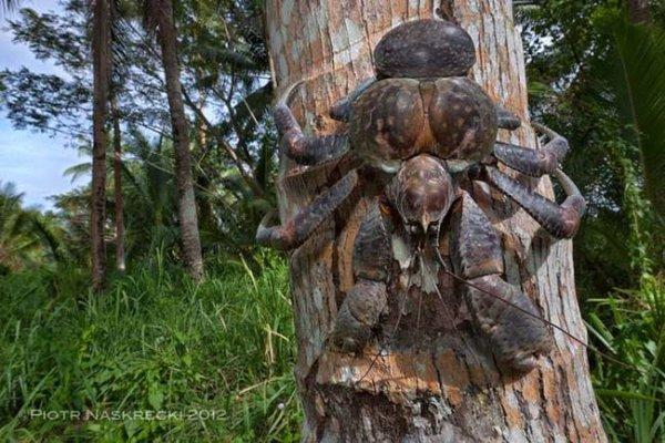 Пальмовые воры – гости из кошмаров (10 фото)