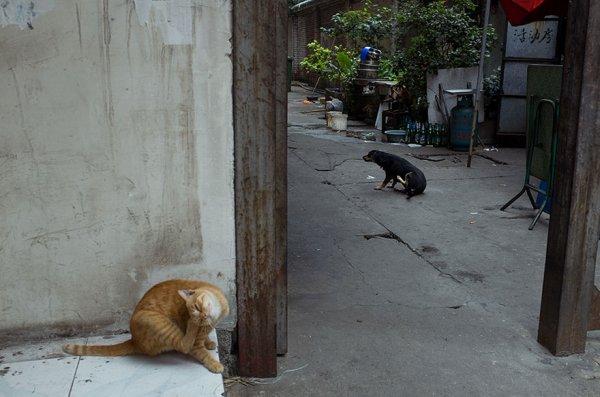 Фотограф-самоучка покоряет Китай своими удивительными фотоснимками (24 фото)