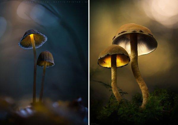 Светящиеся грибы в сказочном мире Мартина Пфистера (14 фото)