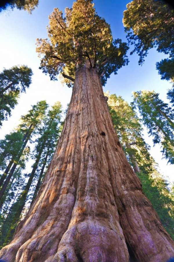 Самые потрясающие деревья на планете (10 фото)