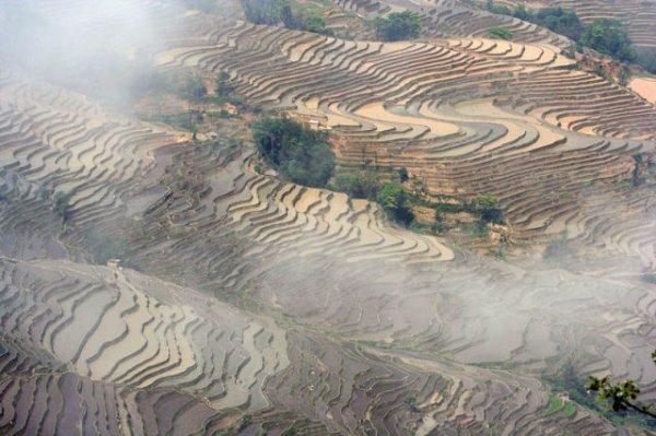 Завораживающая красота рисовых террас в фотографиях (25 фото)