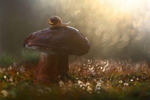 Волшебный макромир в фотографиях Вадима Трунова (27 фото)