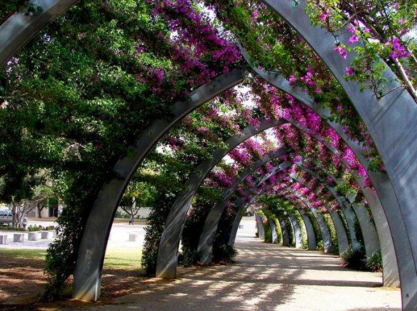 Красивые аллеи, приглашающие на прогулку (23 фото)