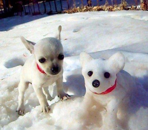 Топ-10: Удивительные копии собак из снега