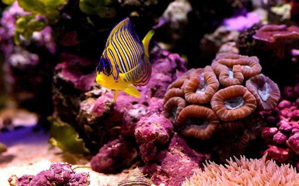 Потрясающая красота кораллов (21 фото)
