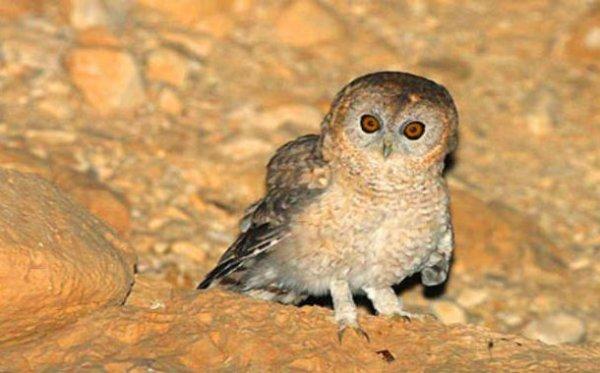 Топ-25: Невероятные новые виды животных, обнаруженные в 2014 году