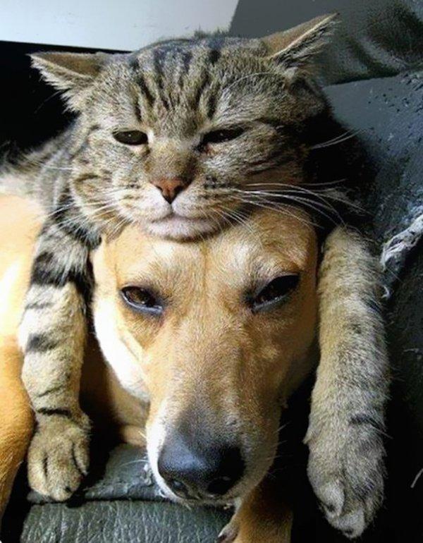 Новый фототренд: кошки вместо шапок (15 фото)
