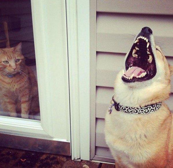 Собаки-хулигаки (15 фото)