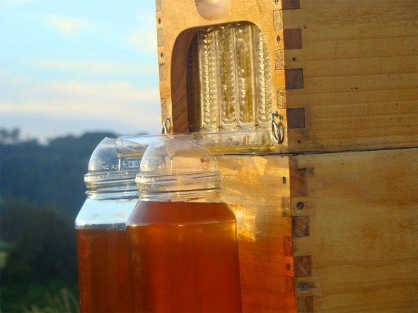 Ульи-новинки, извлекающие мед, не тревожа пчел (5 фото + видео)