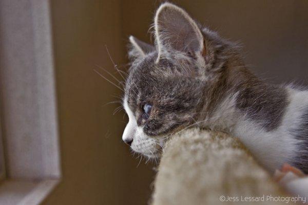 «Кошкин дом» в Калифорнии – крупнейший кошачий приют в США (18 фото)