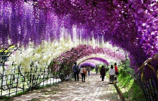 Цветущие аллеи со всего мира (12 фото)