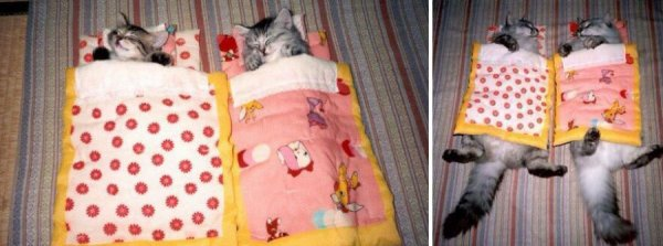 Кошки тогда и сейчас (14 фото)