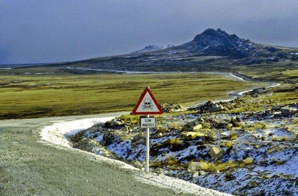 Минные поля Фолклендских островов стали домом целой популяции пингвинов (8 фото)