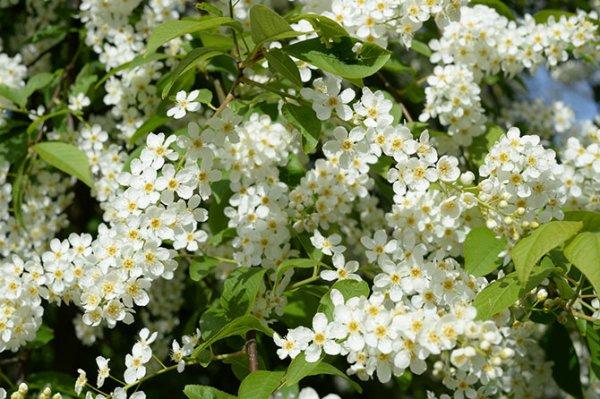 Очарование цветущих деревьев (12 фото)