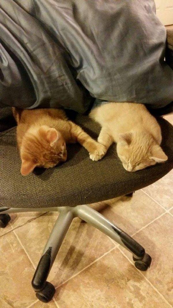 Кошки, которые поднимут вам настроение (15 фото)