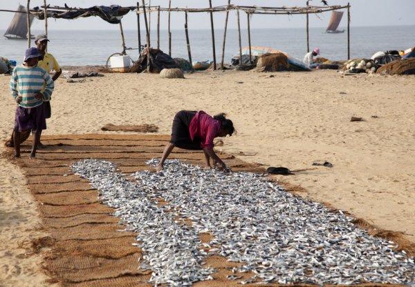 Традиционная рыбалка на Шри-Ланке (18 фото)