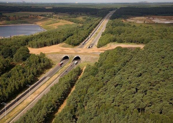 Экодуки – мосты для животных (12 фото)