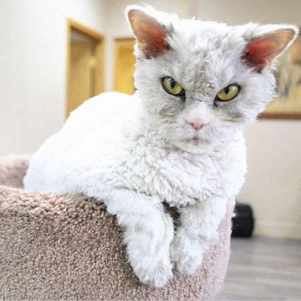 Суровый кот Альберт покоряет Интернет (13 фото)