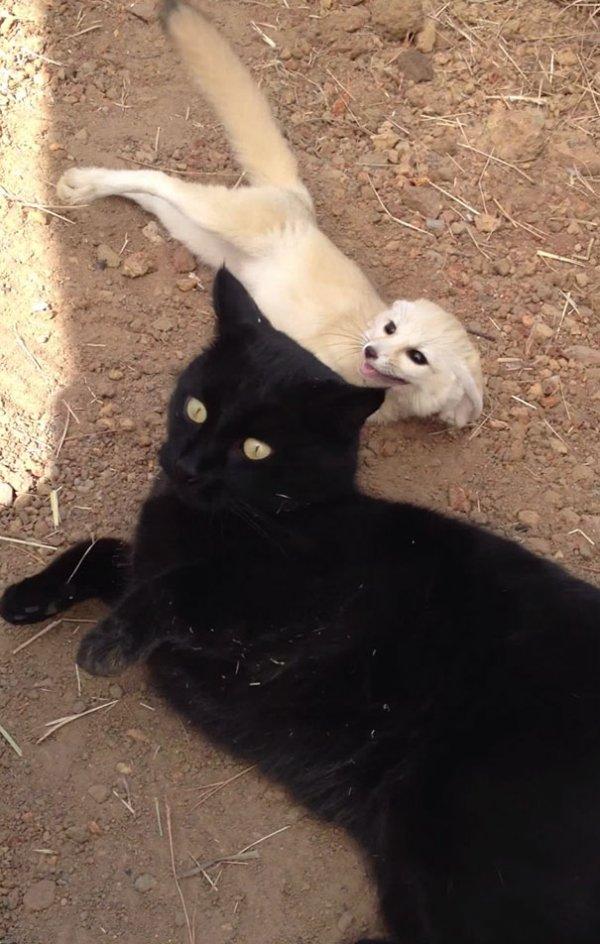 Встреча двух друзей после разлуки (3 фото + видео)