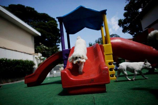 """Собачий детский сад """"Dog Resort"""" в Сан-Паулу (11 фото)"""