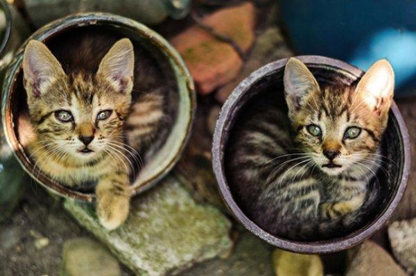 Кошки в цветочных горшочках (18 фото)