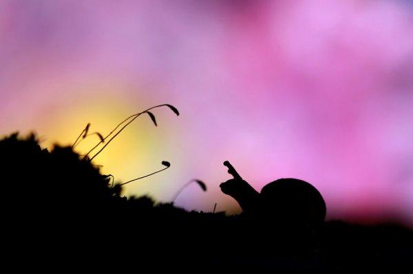Страна чудес Надава Багима (13 фото)