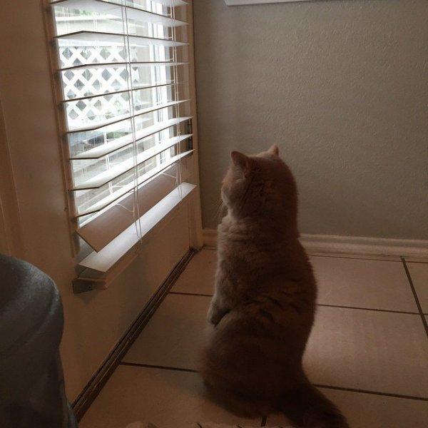 Кот Джордж, который думает, что он человек (12 фото)