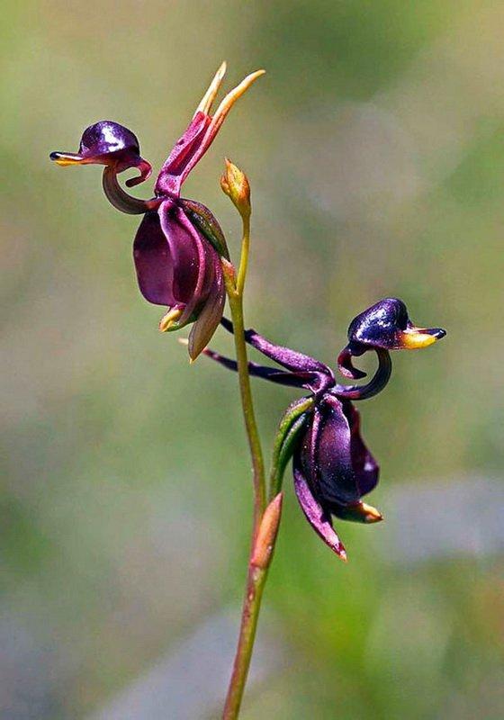 Необычные цветы (37 фото)