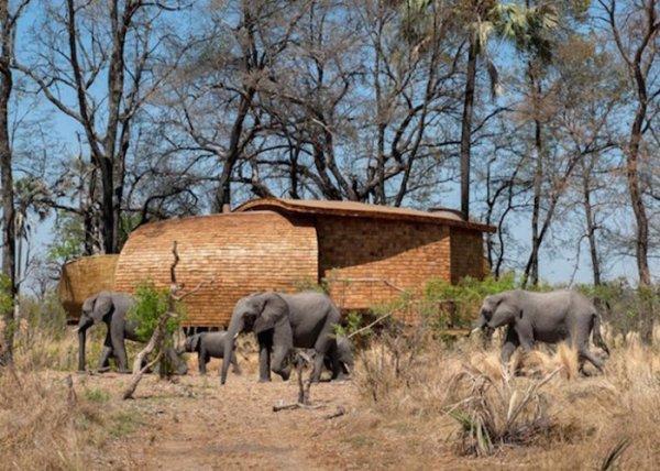 Комфортабельный коттедж в самом сердце дикой природы Африки (11 фото)