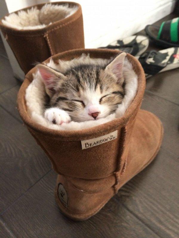 Очаровательные сони из семейства кошачьих (31 фото)
