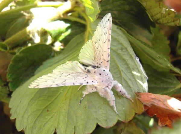 Волшебные превращения в бабочек (36 фото)