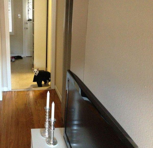 Домашние животные, которых отвлекли от важных дел (27 фото)