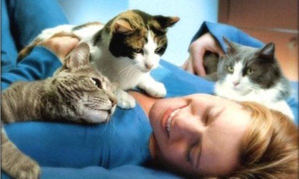 Как кошки проявляют свою любовь и дружбу по отношению к человеку
