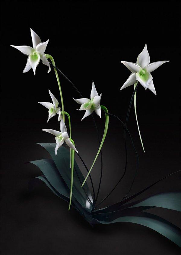 Стеклянные цветы Джейсона Гамрэта (16 фото)