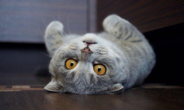 """Кошка Мелисса — """"Эйнштейн"""" в мире кошек (7 фото)"""