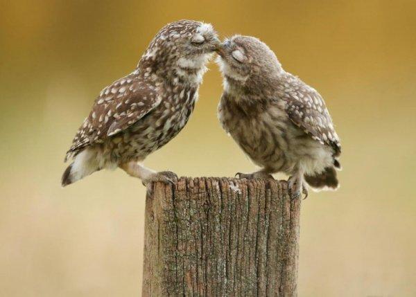 Любовь в мире животных (36 фото)