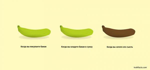 Правдивые факты о жизни от арт-дуэта WUMO (33 фото)