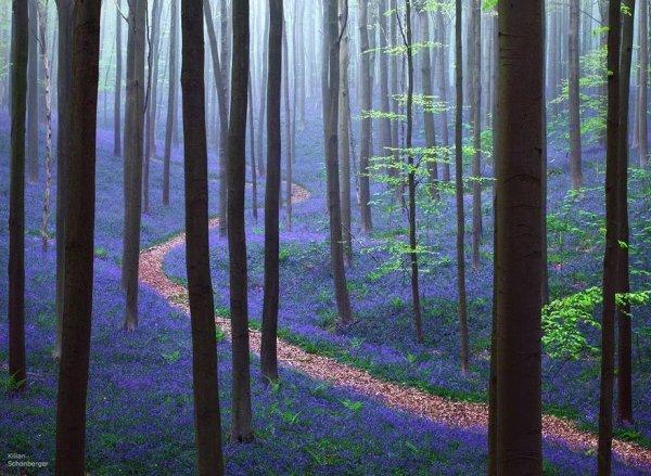 Волшебные аллеи и тропы, приглашающие на прогулку (20 фото)