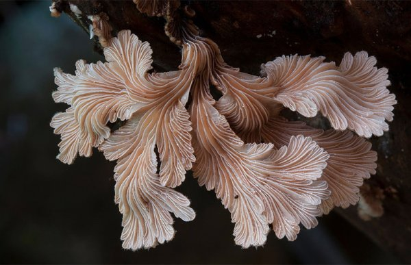 Красивые и необычные грибы в фотографиях (20 фото)