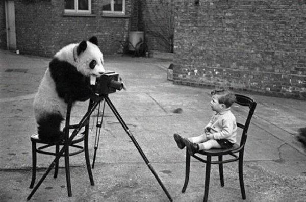 Дикие животные, которые любят фотографировать (24 фото)