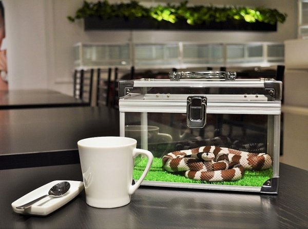 В Токио открылось кафе со змеями (7 фото)