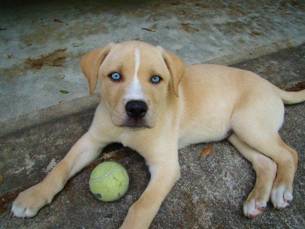 Очаровательные помеси собак (20 фото)