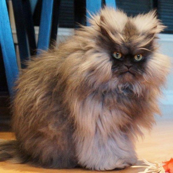 Самые популярные кошки в Интернете (14 фото)