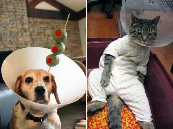 Забавные домашние животные в защитных воротниках (14 фото)