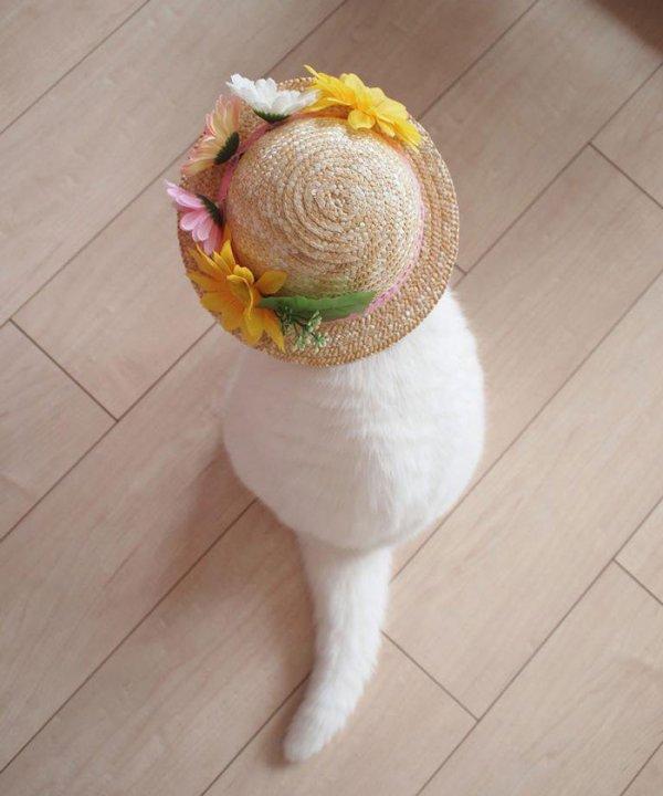 Кошка Ура — Интернет-звезда Японии (9 фото)