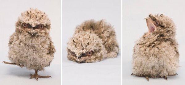 Очаровательные лягушкороты с забавной внешностью (28 фото)